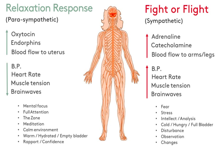 Relaxation response chart of human body